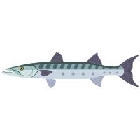 barracuda icon