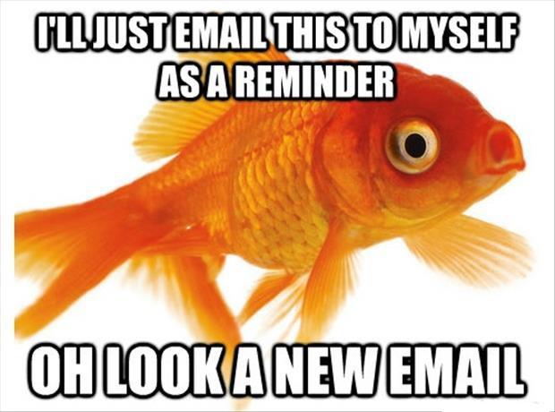 forgetful goldfish meme