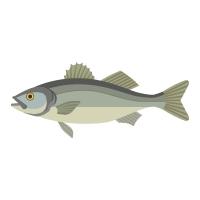 Saltwater Live Bait - Saltwater Fishing Basics | Fishmaster