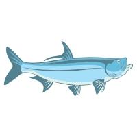 tarpon fish icon