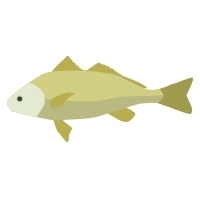 snook fish icon