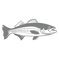 striped bass icon