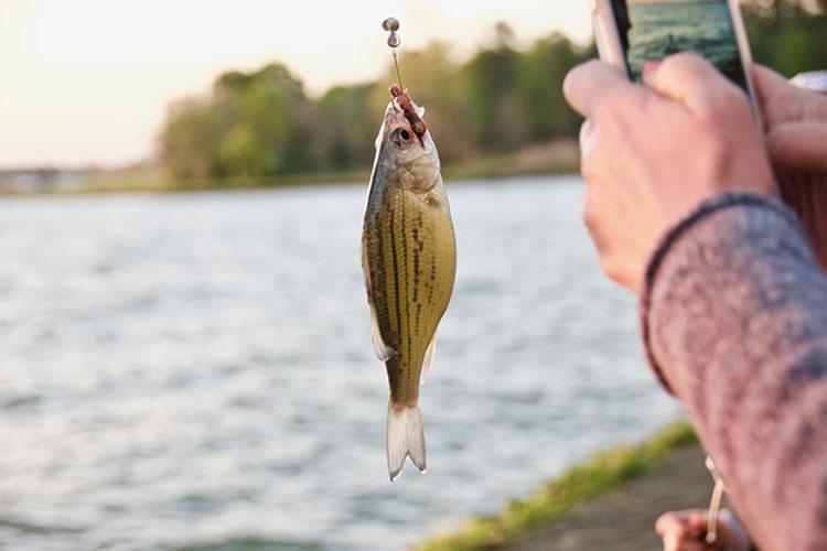 Best Live Bait for Freshwater Fishing