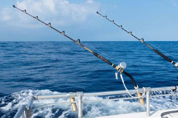 Saltwater Live Bait - Saltwater Fishing Basics